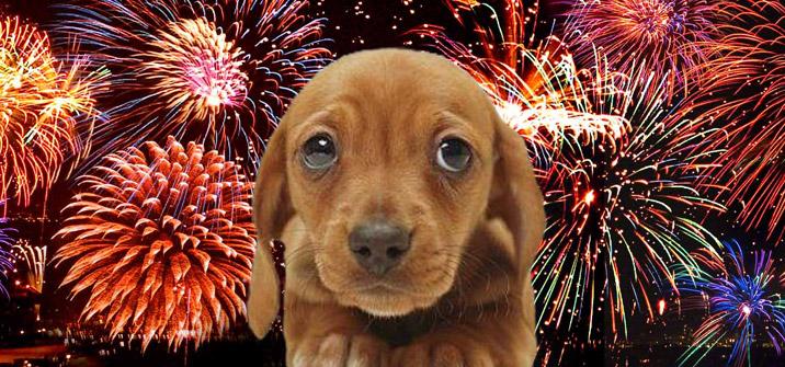 firework-puppy