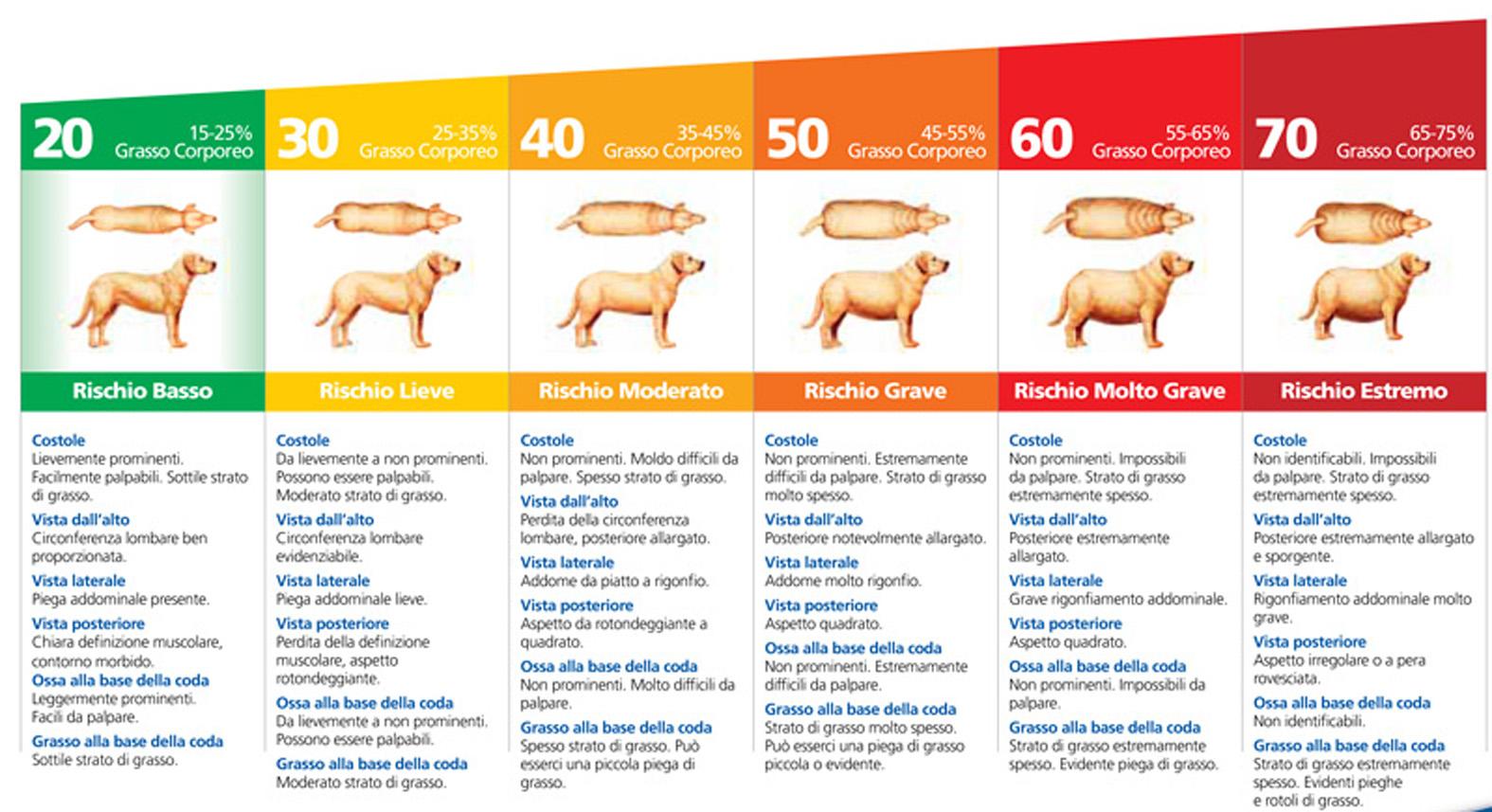 Lalimentazione Del Cane 2 Sovrappeso E Obesità Corsi Di